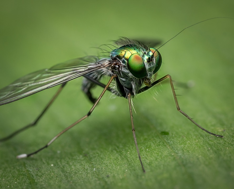 HOW TO KEEP FLIES OUT OF YOUR HOUSE